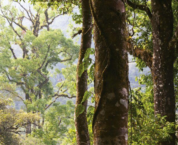 Día mundial del árbol: beneficios que nos aportan