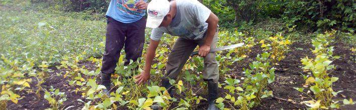 ¿Qué pasa en los pueblos indígenas durante la pandemia del COVID-19?